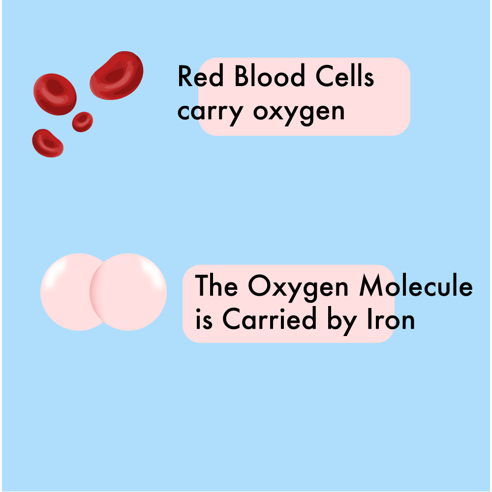 representation of blood cells and oxygen molecule