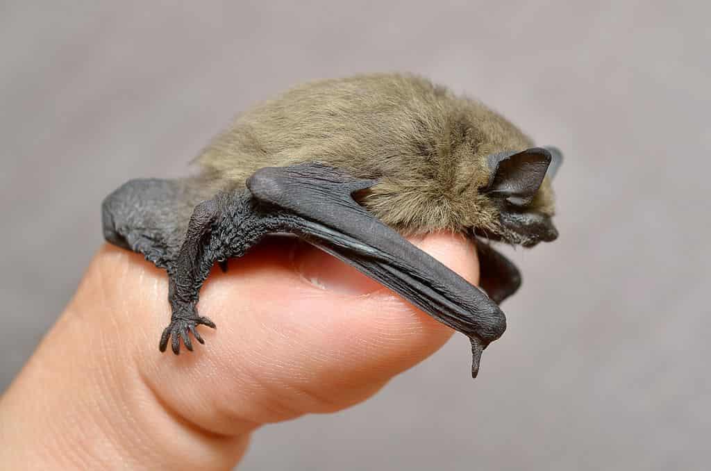 a bat sitting on a finger