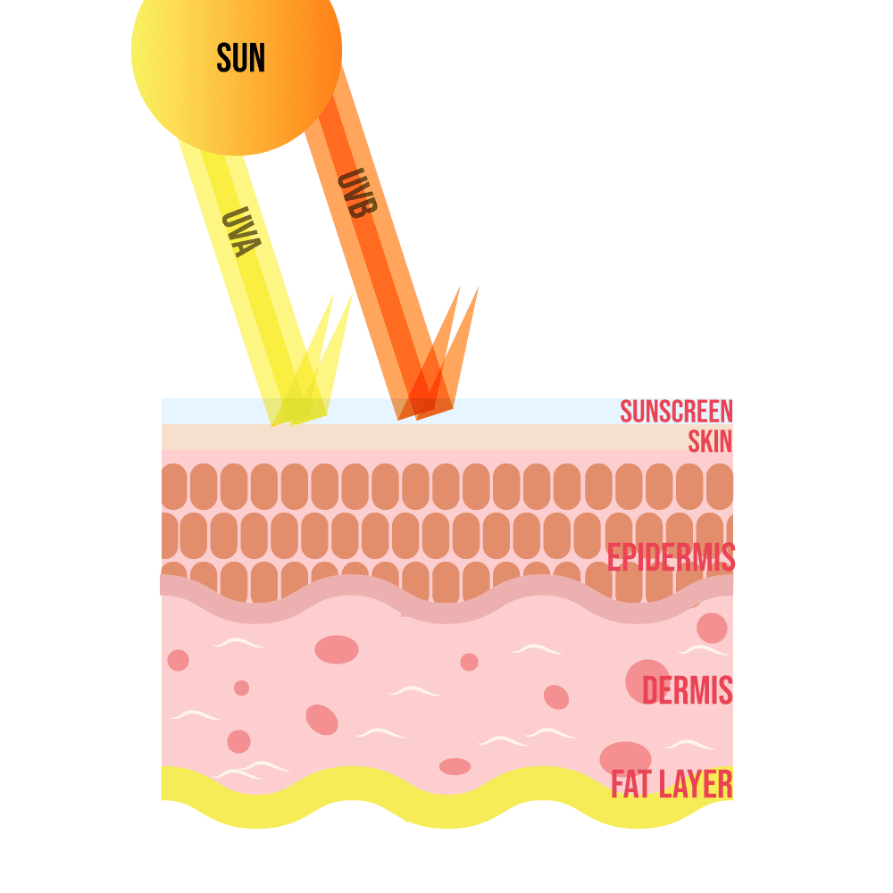How sunscreen reflects the UVA and UVB of the sun
