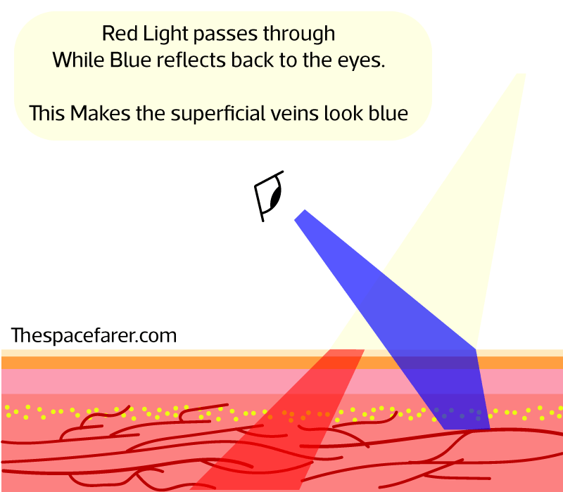 visual explanation for the apparent blue color of veins